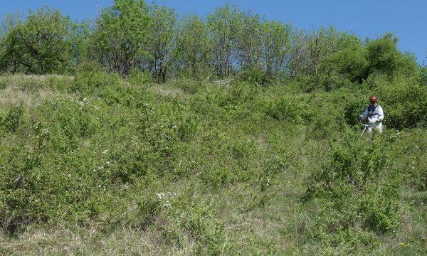 Landschaftspflege, Spitzerberg