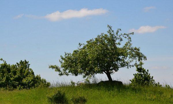 Landschaftspflege, Königswarte